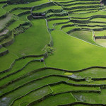 Banaue : The rice terraces near Banaue are over 2,000 years old.  They've been honored as a UNESCO World Heritage Site.  Enjoy the green terraced landscapes!