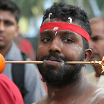 Thaipusam Festival - Photo Documentary : Hindu festival celebrated mostly by the Tamil community on the full moon in the Tamil month of Thai.  Photographed in Singapore 2007.  On the day of the festival, devotees will shave their heads undertake a pilgrimage along a set route while engaging in various acts of devotion, notably carrying various types of kavadi (burdens). At its simplest this may entail carrying a pot of milk, but mortification of the flesh by piercing the skin, tongue or cheeks.