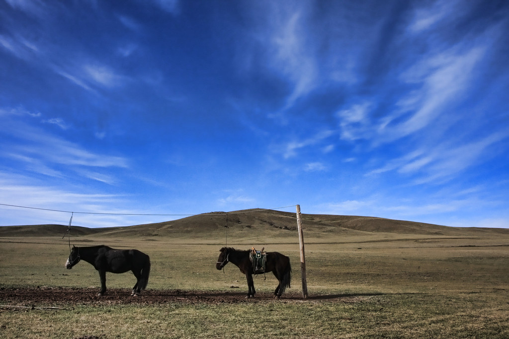 Horses tied up near a ger in Terelj National Park