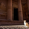 Purrfect Petra : 